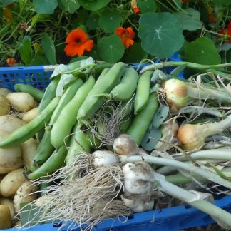 Seeds, Compost, Veggies & Flowers