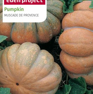 Squashes, Pumpkins & Courgette Seeds